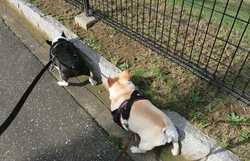 11-17散歩2
