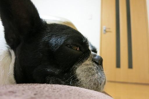 12-5ふる寝る②
