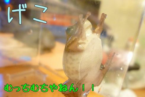 もんちゃん 090