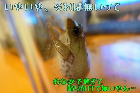 もんちゃん 084