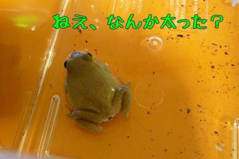 もんちゃん 066