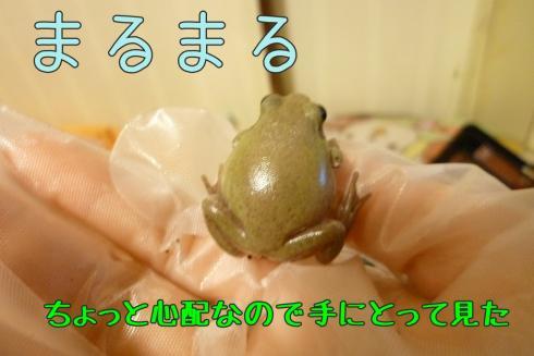 もんちゃん 060