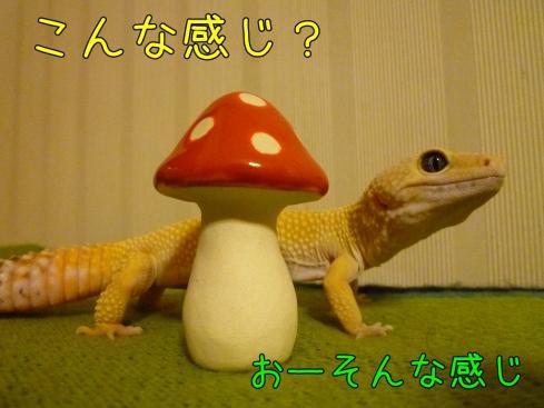 もんちゃん 099