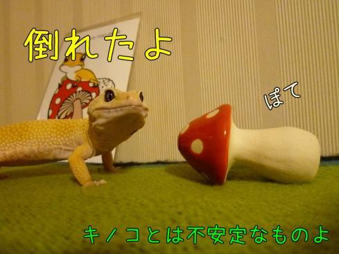 もんちゃん 096