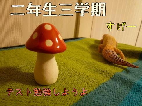 2-3もんちゃん 068
