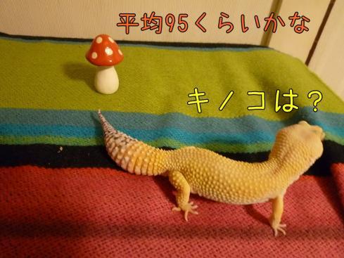 3-1もんちゃん 069