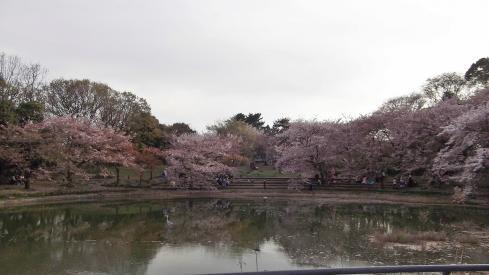 桜の下でコスプレ