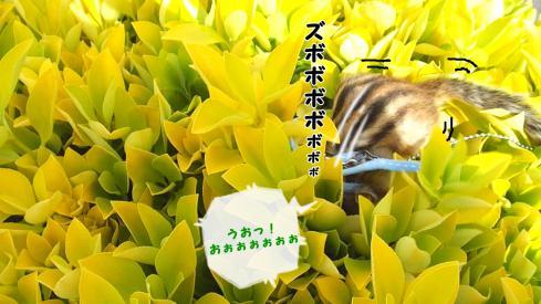 花みたいな葉っぱ7