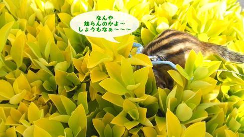 花みたいな葉っぱ6