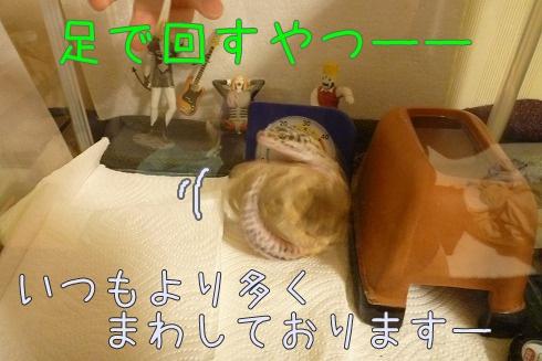 7P1060014.jpg