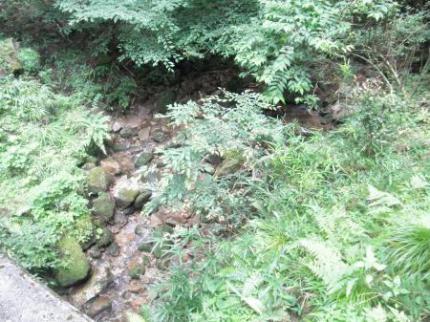 自然歩道1