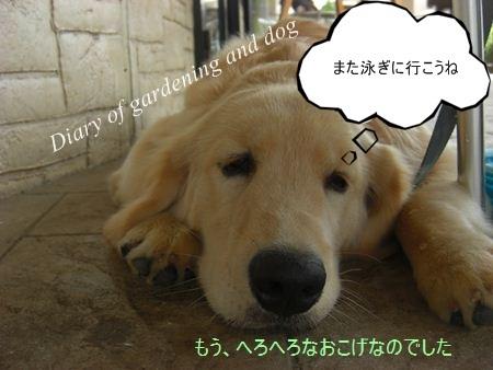 CIMG3374_R.jpg