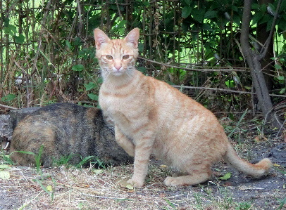 0120525-猫-3