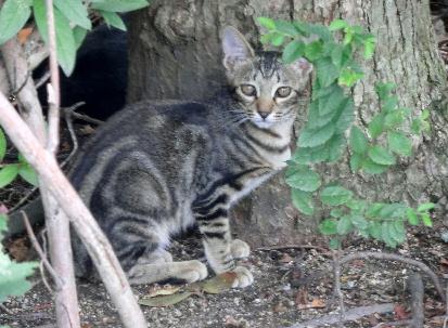 120901-子猫-6
