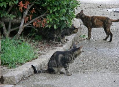 120901-子猫-5