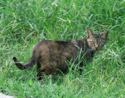 120901-子猫-1