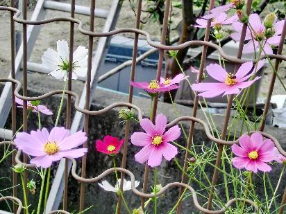 121030-公園の花-5