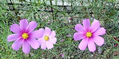 121030-公園の花-4