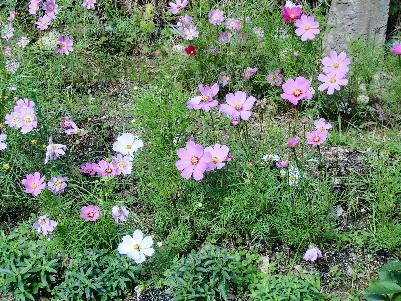121030-公園の花-3