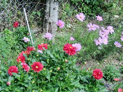 121030-公園の花-3.5