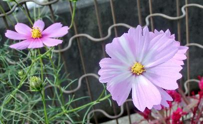 121030-公園の花-6
