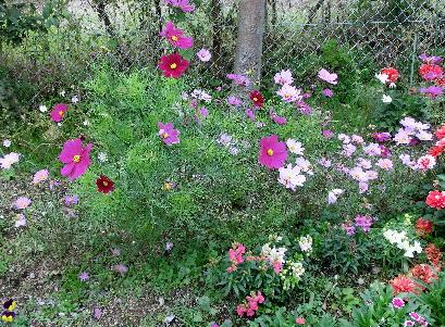 121201-公園の花-2