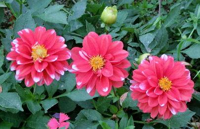121201-公園の花-7