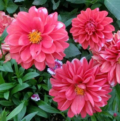 121201-公園の花-6