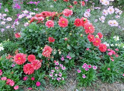 121201-公園の花-5