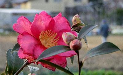 140130-公園の花-1