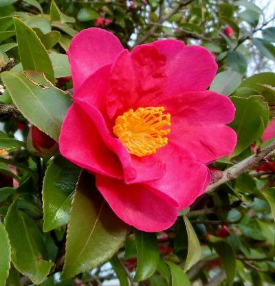 140130-公園の花-4