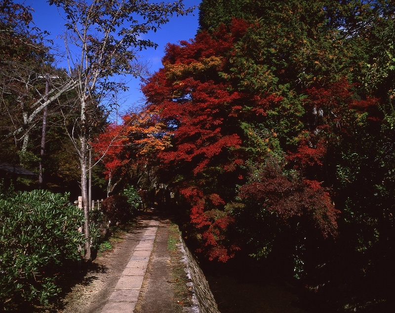 哲学の道の紅葉3