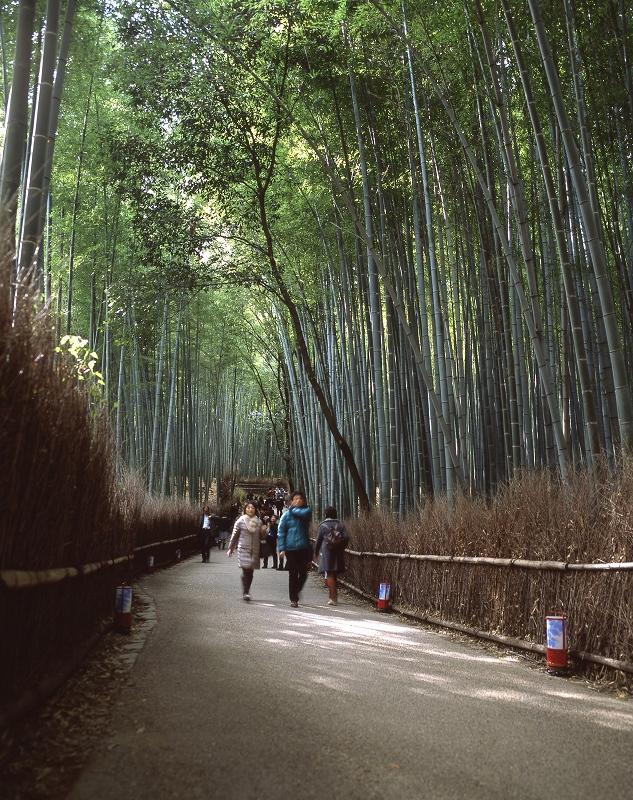 嵐山の竹藪