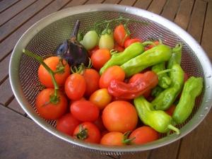 いろとりどりの夏野菜達