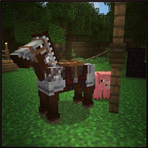 horse armor and fence