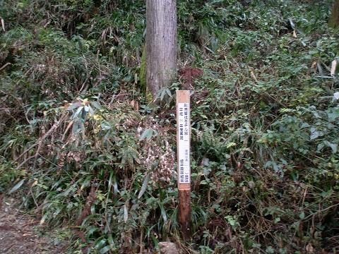 yoshitani 035