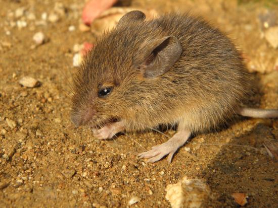 2012 1201 ネズミ