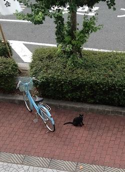 IMG_1323黒にゃんこ
