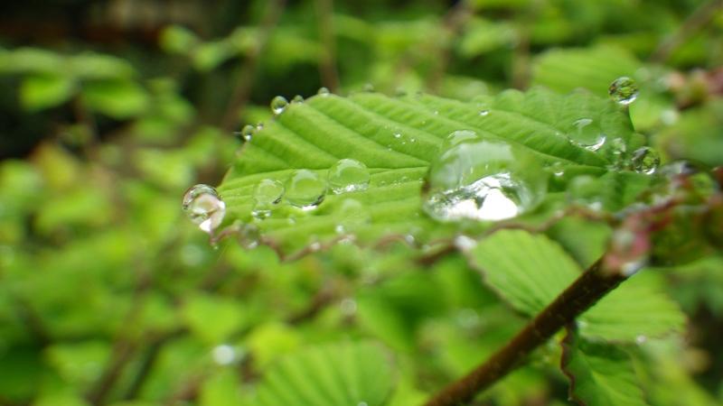 雨上がりの植物は美しいw