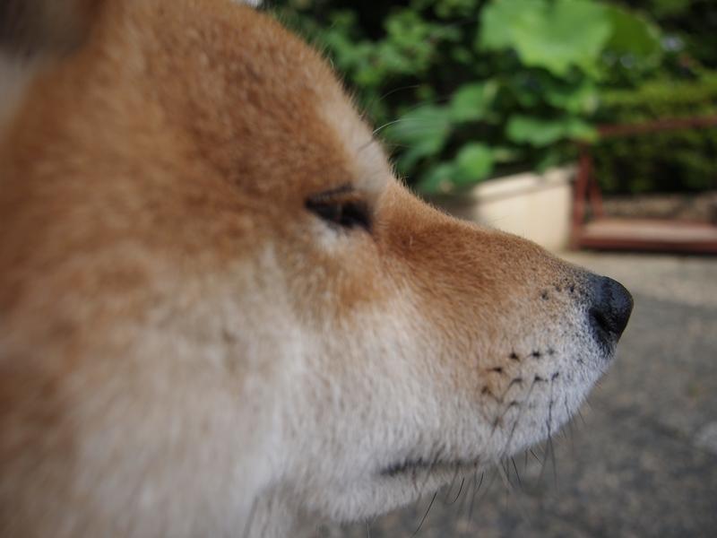 本来動物は目にピントを合わせるものなんだけど、鼻にピント合っちゃった。。。