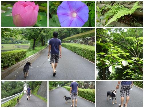 雨の合間のお散歩♪
