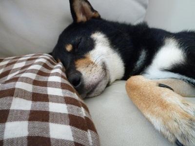 いつも寝ている太陽号^^