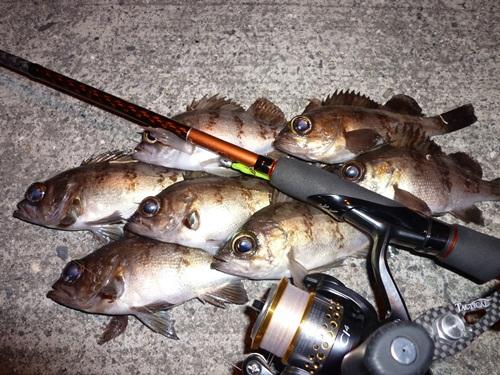 釣り初めの釣果です。