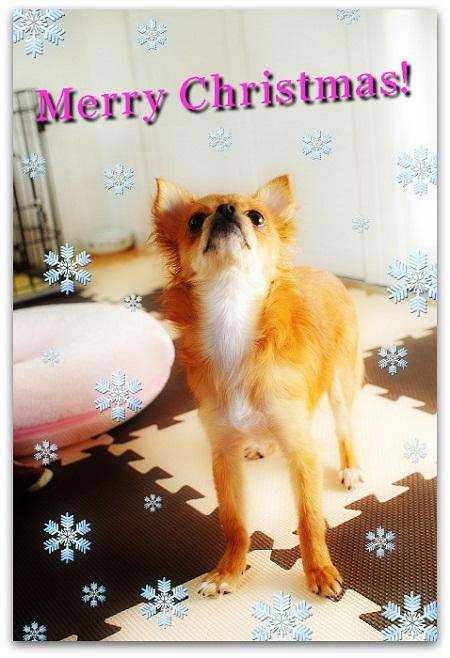 マヨたん初のクリスマス
