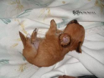 やっと寝た
