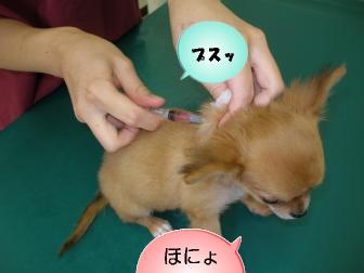 ワクチン接種①
