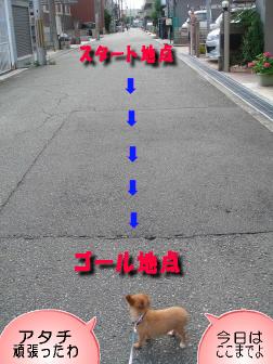 30M散歩