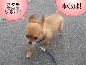歩くわ!!