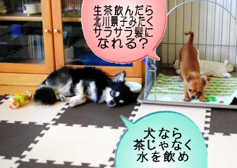 生茶で北川景子