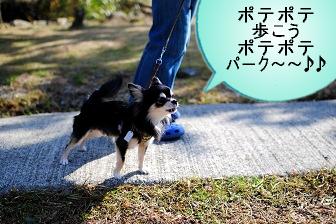 ポテポテ散歩